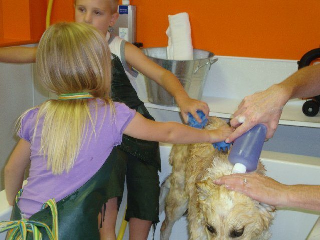 picture of Wash N Wag Akron Self Serve Dog Wash