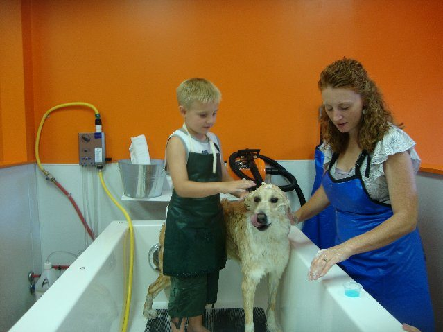 picture of Dogs love pampering facials