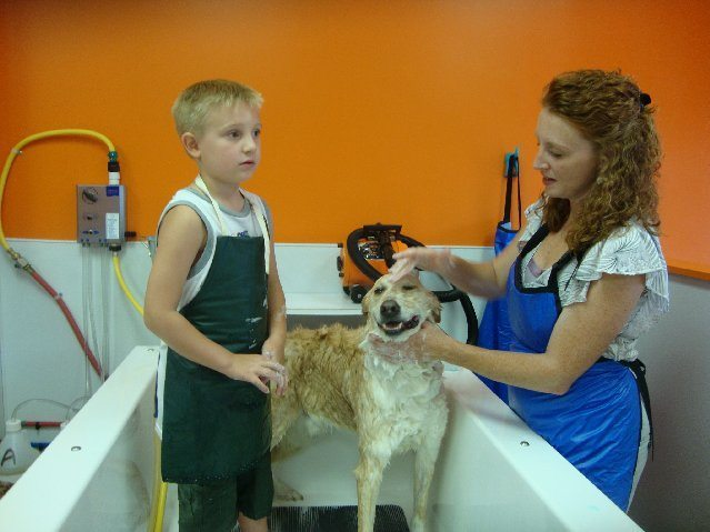 picture of Who says dogs don't like baths? Dogs love Wash N Wag