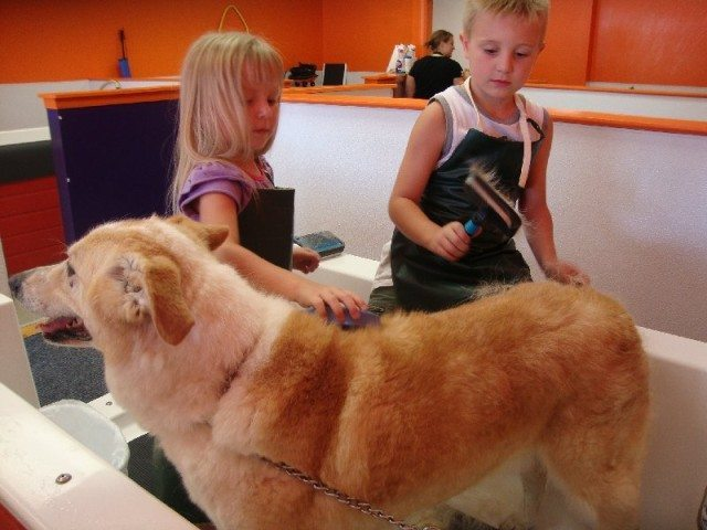 picture of Brushing Arnold at Wash N Wag