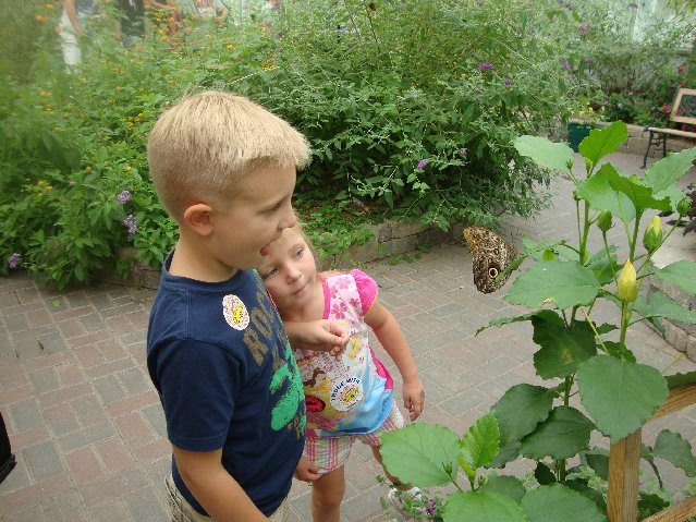 picture of Kids checking out butterflies at Put-in-Bay Butterfly House