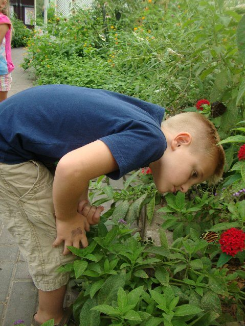 picture of Elijah discovering butterflies at the Butterfly House
