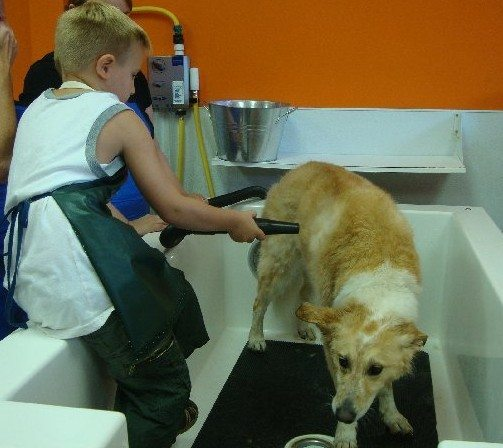 picture of Quiet Dryer to blow dry dog's fur