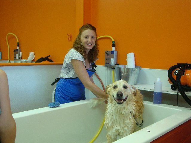 picture of Easy Self Serve Dog Wash in Akron