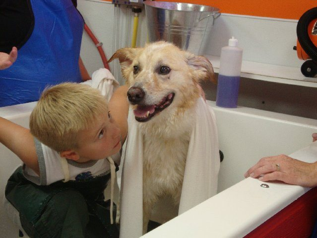 picture of Super Absorbent Towels to dry dogs fast
