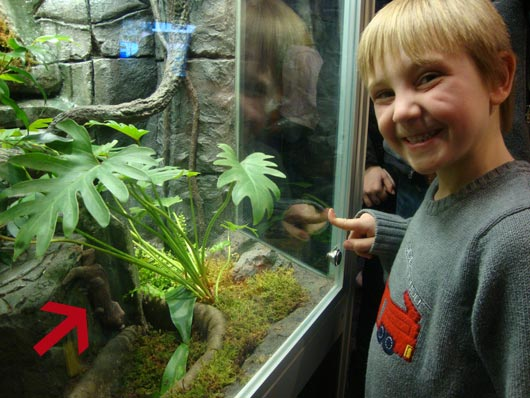 picture of Gecko at COSI exhibit