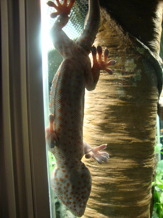 picture of Get an up close look at geckos at COSI