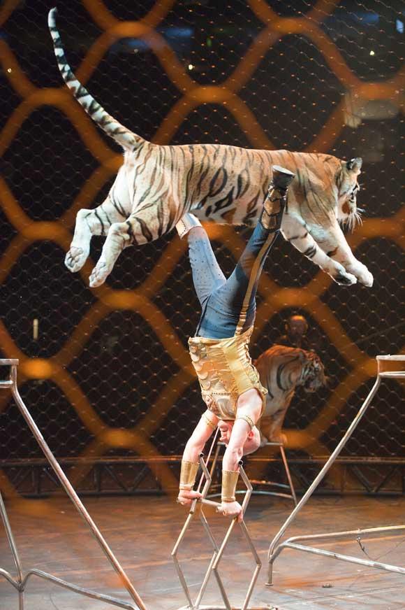 Taba and Tiger Circus Act
