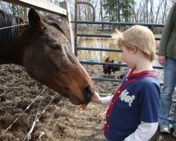 picture of Feeding Horse at Spicy Lamb Farm