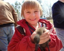 picture of Holding Baby Duckling at Spicy Lamb Farm in Peninsula, OH