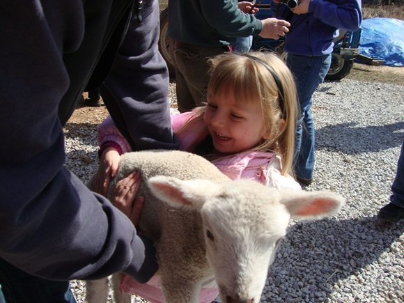 picture of Holding Baby Lamb at Spicy Lamb Farm Lambing Days