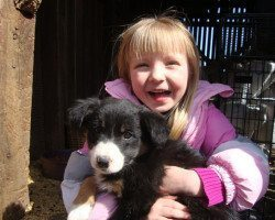 picture of Holding a Puppy at Spicy Lamb Farm