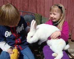 """picture of Holding the """"Easter Bunny"""" at Spicy Lamb Farm"""