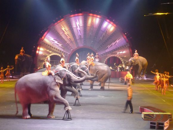 picture of Circus Elephants Acts