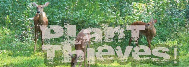 Plants Deer Eat