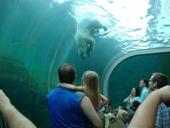 picture of Columbus Zoo Polar Bear