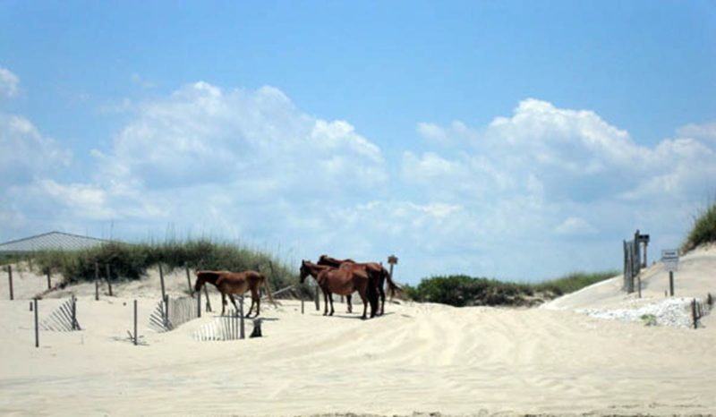 Wild Horse Adventures Tours #OBX #OuterBanks