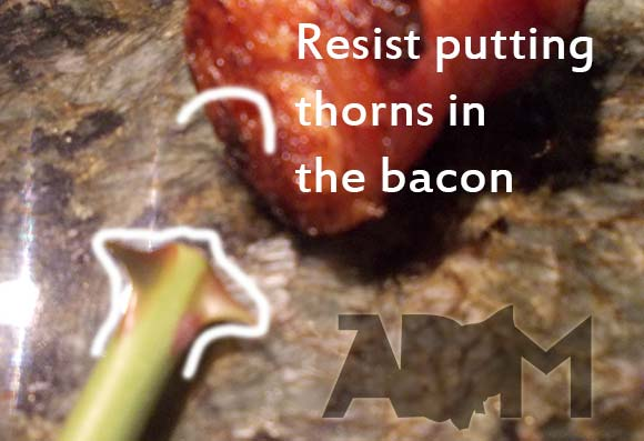 Thorns in the Bacon