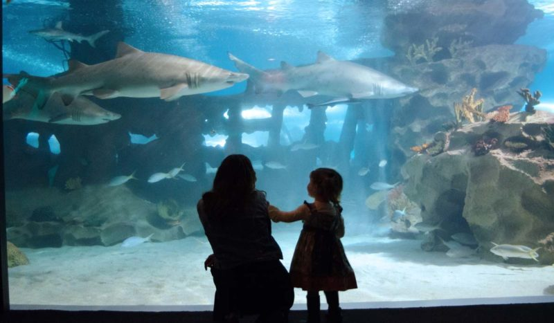 Mothers day Greater Cleveland Aquarium
