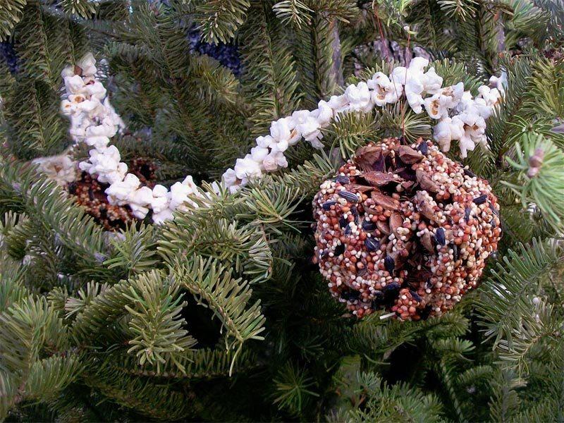 pine-cone-bird feeder