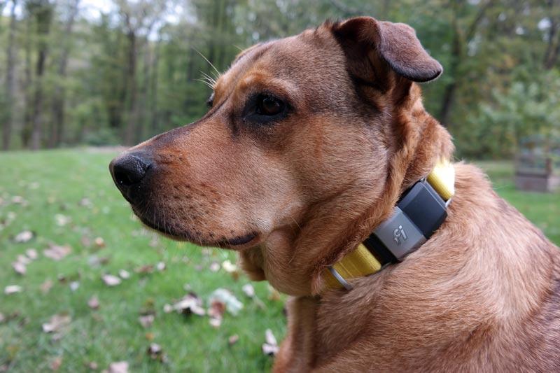 GPS Dog Collar Fi Review